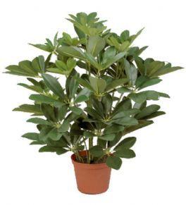 salg af Schefflera 45 cm. - kunstig plante - kunstig blomst