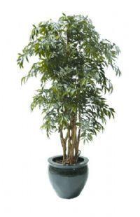 salg af Shirikashi 160 cm. - Kunstige træer
