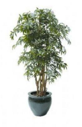 salg af Shirikashi træ, 130 cm. - Kunstige træer