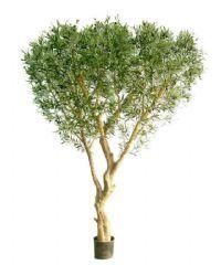 Træer 2-5 m.