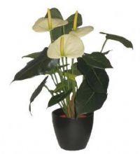 Potteplanter og orkideer