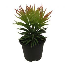 salg af Sukkulent, 23 cm. - kunstig plante