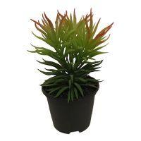 salg af Sukkulent, 23 cm. - kunstige planter