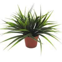 salg af Sweet grass, 23 cm. - kunstige planter