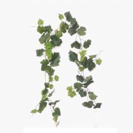 salg af Vinranke 185 cm. grønne druer