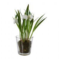 salg af Vintergæk i glas, 20 cm. - kunstige blomster